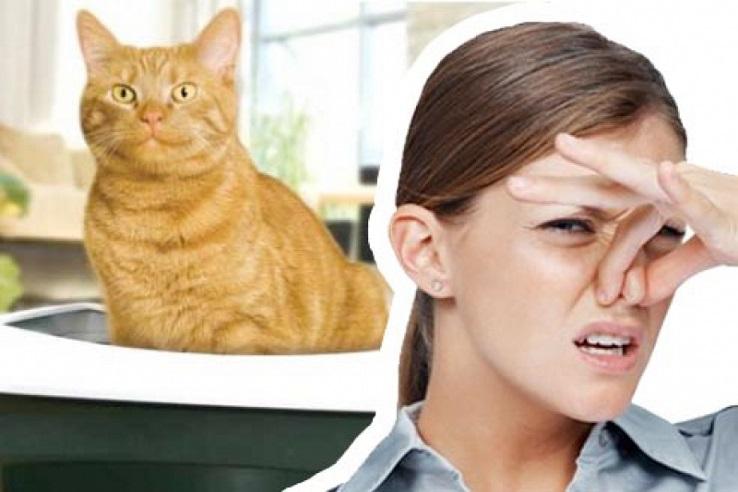 Запах мочи домашних животных в Пензе