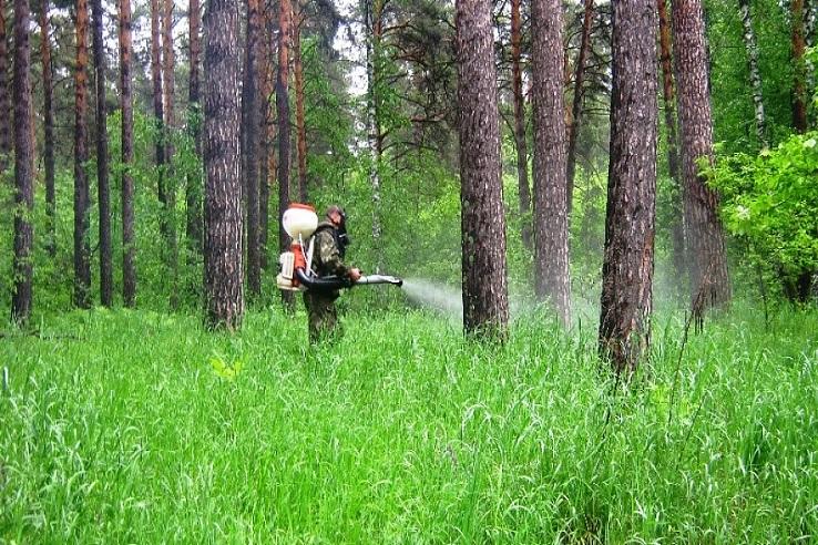 Обработка от клещей лесных массивов в Пензе